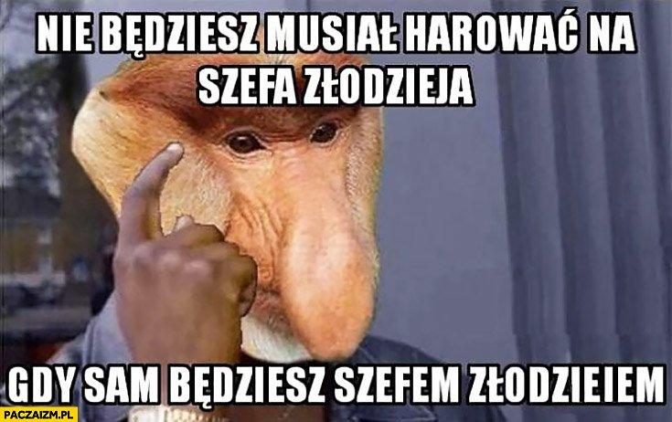 Mem z małpą polakiem murzyn nie będziesz musiał harować na tego złodzieja.